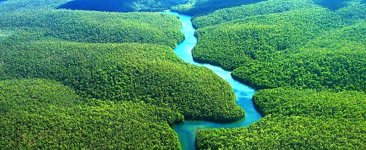 amazon-rainforest-ecological-wonder-biodiversity-store